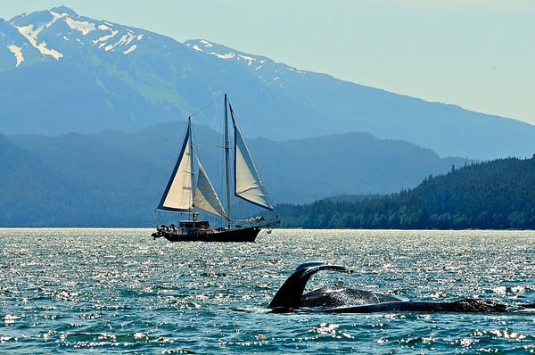 Whale Watch / Alaska