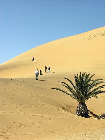 Namibian Desert - Namibia / Africa