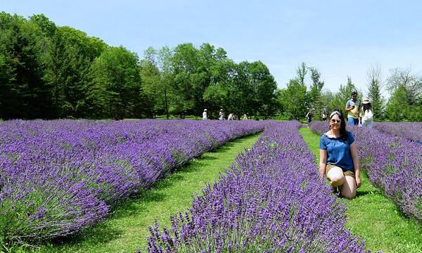 Purple Fragrance / Canada