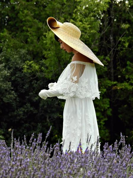 Lavender Fields / Canada