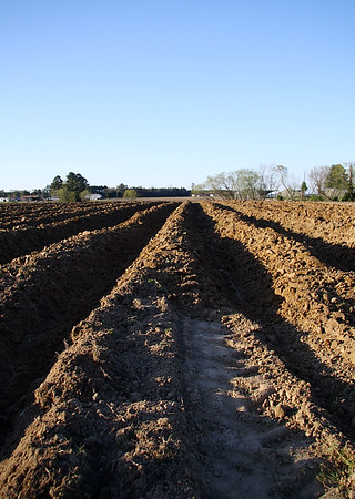 IMG#0016 Newly plowed tobacco field, Harrell Farms