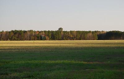 IMG#0017 Across bare Tobacco fields in North Carolina