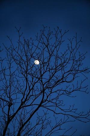 IMG#0086  North Carolina Moon