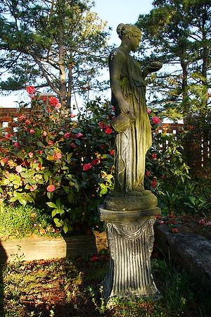 IMG#0006 Faye Harrell's Camelia garden.