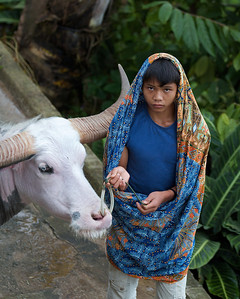 """Boy and his buffalo, Toraja, Indonesia.  This was taken during the funeral """"season"""" where it's common to sacrifice buffaloes in honor of the dead.  Perhaps this explains the boy's apparent sorrow?"""