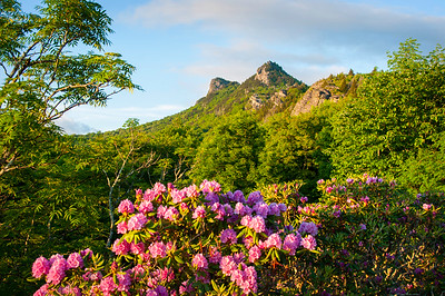 Grandfather Mountain-Rhododendrons