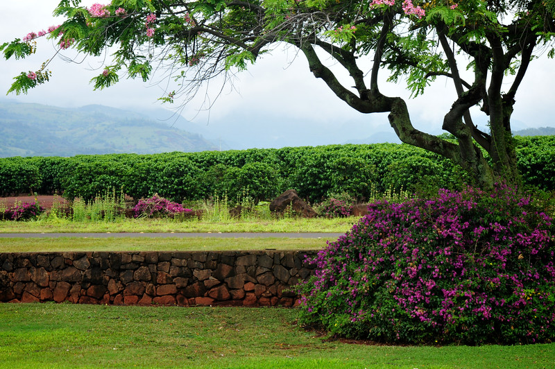 Kauai Coffee Plantation, Kauai