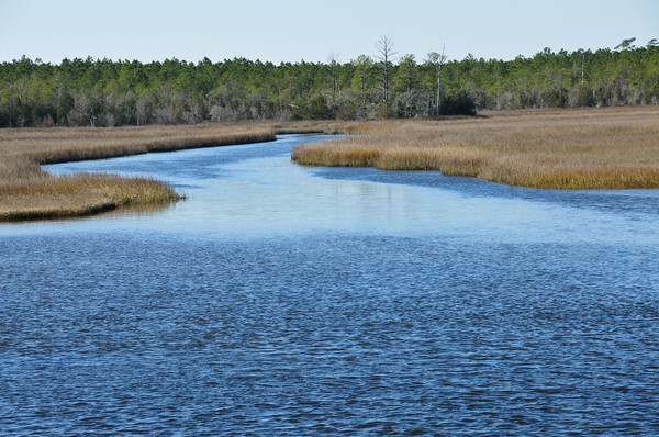 North Carolina Coastal Wetlands - Off of the Intracoastal Waterway.