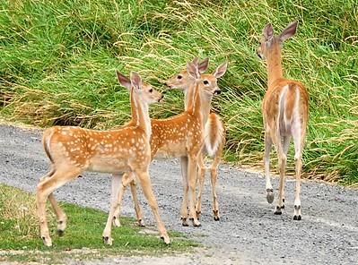 Deer Hunting ( with a Nikon ) - Palouse, WA