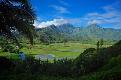 Hanalei River Valley - Kauai