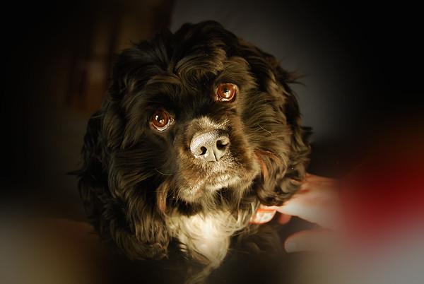 """Huch"" The Wonder-Pup"