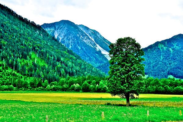 Alpine Meadow - Bavarian Alps, Germany