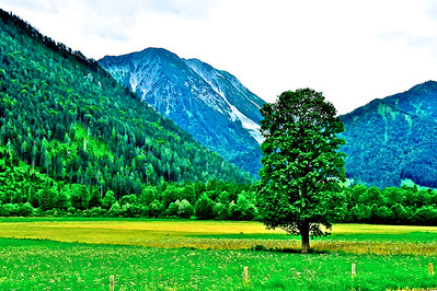 Alpine Meadow - Bavarian Alps, Germany