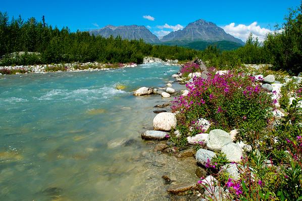 Rushing Stream & Fireweed Flowers Along The Glenn Highway - Alaska