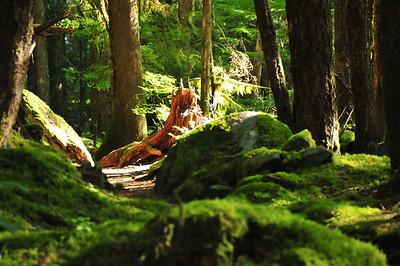 Deep Forest Green - Nooksack State Park, Washington