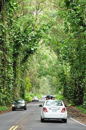 Tree Covered Road - Kauai