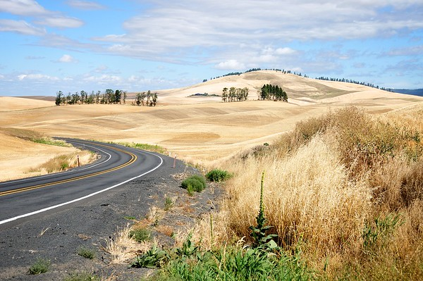 HWY 27 Winds Through The Grain Fields - Palouse Scenic Byway