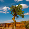 <u>Dead Horse Tree</u> This photo has become one of my signature shots.  You can find it on the back of my business cards.  Taken at Dead Horse State Park in Moab, UT it is one of my very favorite photos.