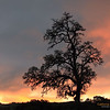 """Sunset and California's Oak Tree"" <br>Location: Joseph D Grant State Park, California.  <p><p>What a day today! Monday always starts off busy and you never seem to have enough time. It has been raining on and off all day today but it was a perfect weather for landscape shots. I almost thought of taking a day off today but that did not materialize. Anyway, the best I could hope for was to run to the hills after work and catch those fleeting moments at sunset. It was indeed an awesome sunset and I was just happy to be here and witness all the drma in the sky.  <p>Tech Info: <br>Lens: Canon EF 70-200 f/4L IS @ 70mm <br>Camera: Canon EOS 5D Mk II <br>Exposure: 1/15sec at f/13 and ISO 200 <br>Filters: No filters (Though I think I should have used ND filter but light was changing so fast and I was pressed for time that I just managed to setup a tripod and catch this)"