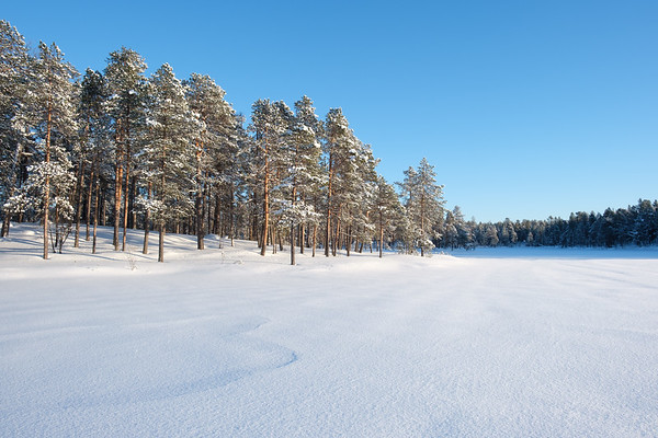 Trees line a frozen Lake Maa, Nellim, Finnish Lapland.