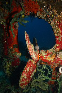 The propeller of the Willaurie, off New Providence Island, Bahamas.