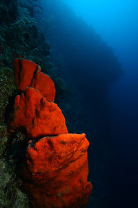 Deep along Palace Wall, I was able to find these bright orange sponges.