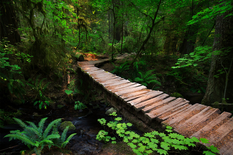 A Walk in the Woods - Whistler, B.C.