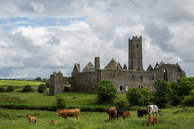 Cows and Castle, Ireland