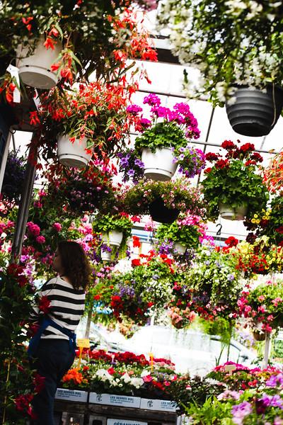 Hanging Gardens, Montreal