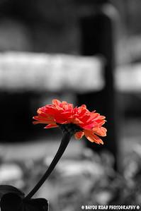 Pink Flowerr