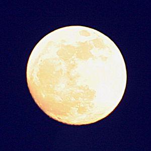 Bark at the moon.