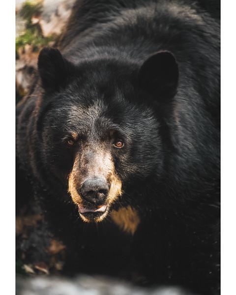 Good Morning, Bear.