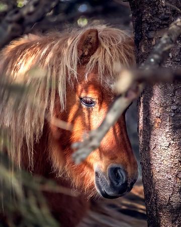 Moody Pony