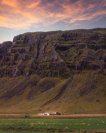 Iceland Sheep Farm