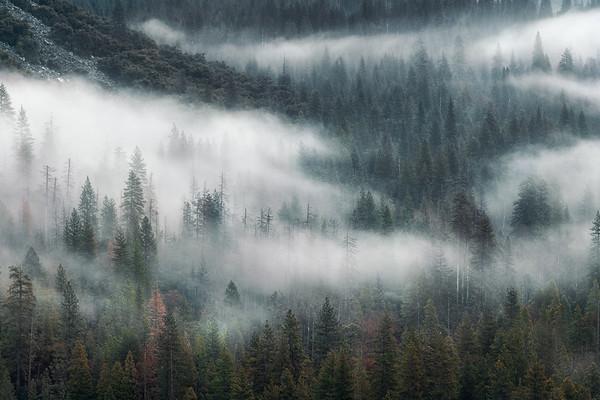 Dreams of Fog