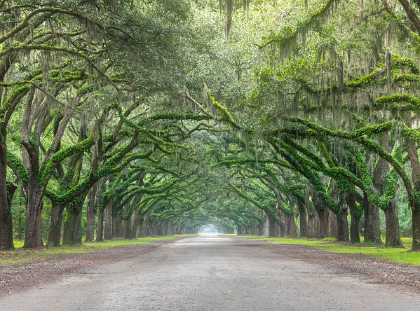 Wormsloe Estate