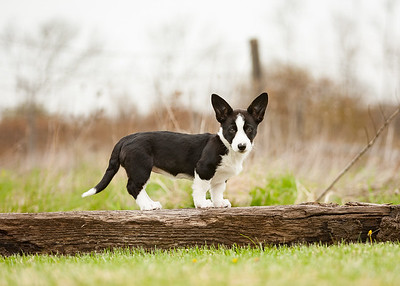 Outdoor dog photographer Niagara
