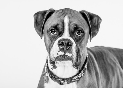 Studio Dog Photographer Niagara