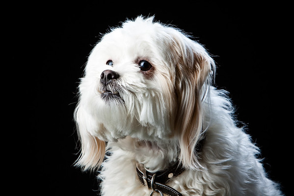 Pet Portrait Photographer in Niagara