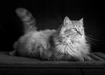 Pet Portrait Photographer in Niagara