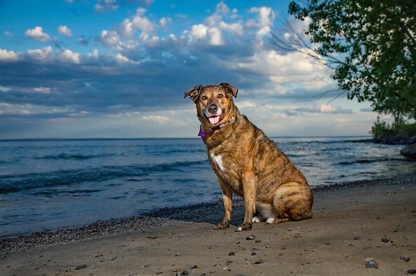 Outdoor dog photographer Niagara