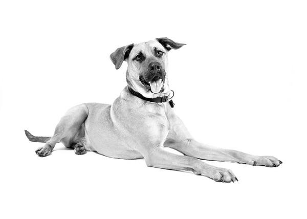 Studio Dog Photographer Niagara