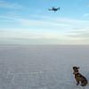 Dog Loves Tech