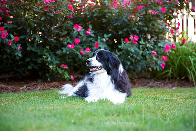 Pet Photography - Oak City Photography Raleigh NC