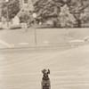 Pet Photography - Oak City Photography Raleigh NC