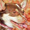 Golden Star Photo, Pet Photography, Northern California Pet Photography, Sacramento Pet Photographers
