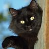 """""""PJ-Attack CAT!"""""""