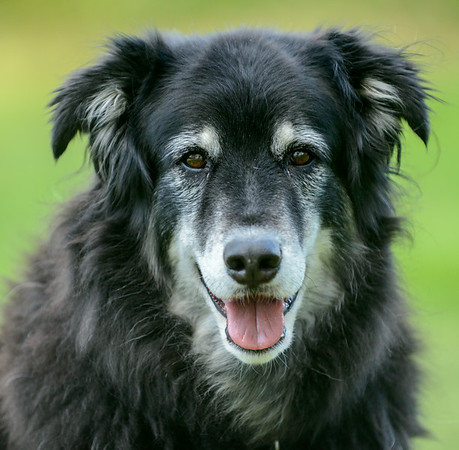 My Dog King