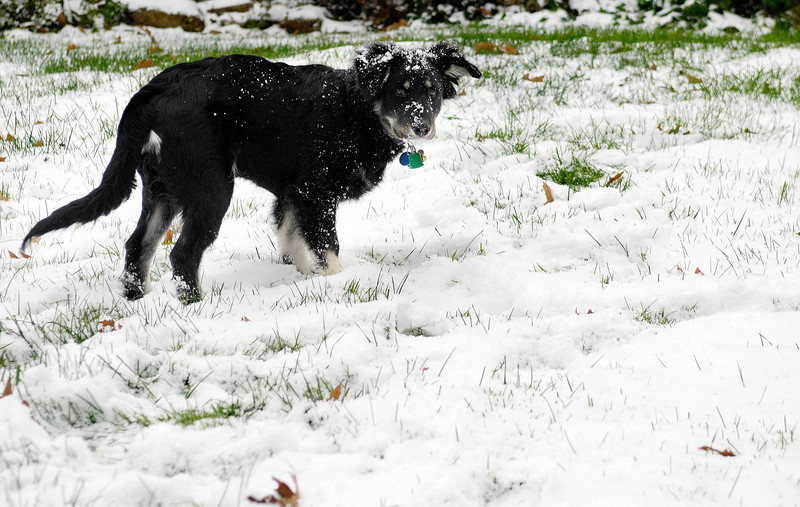 King's First Snow