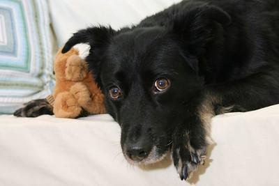 Peluna. Rescued mexican mutt.
